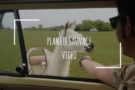planete-sauvage-video