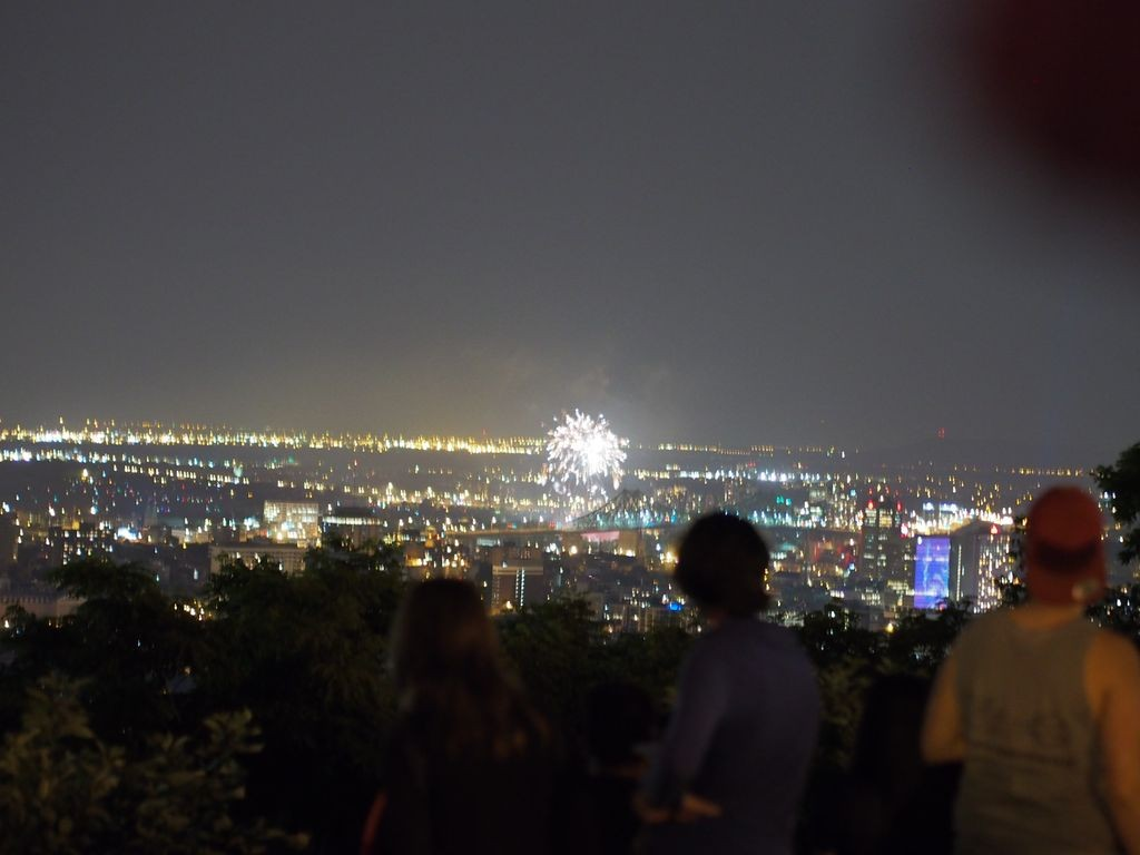 Mont-Royal-Racoon_3