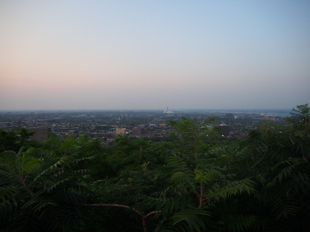 Mont-Royal-Racoon_47