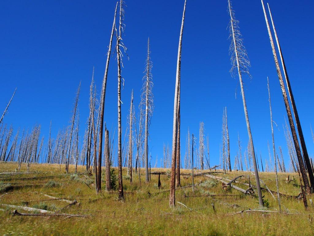 Wyoming-Yellowstone-184