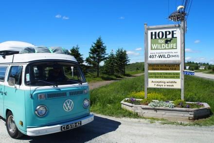 hope for wildlife